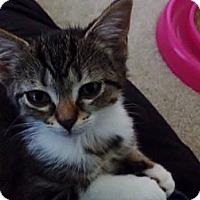 Adopt A Pet :: Tabitha - Byron Center, MI
