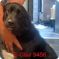 Adopt A Pet :: E Clair - Greencastle, NC