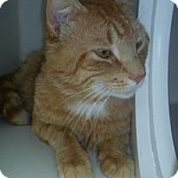Adopt A Pet :: Bernie - Hamburg, NY