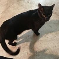 Adopt A Pet :: Uno - Naples, FL