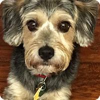 Adopt A Pet :: Lucky~~ADOPTION PENDING - Sharonville, OH