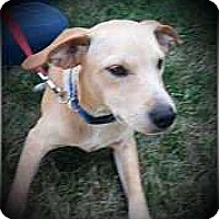 Adopt A Pet :: Laser - Columbus, OH