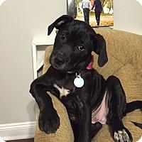 Adopt A Pet :: Molly - Knoxville, TN