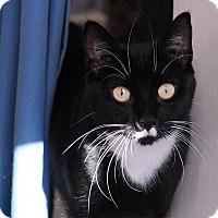 Adopt A Pet :: Dee - Winchendon, MA