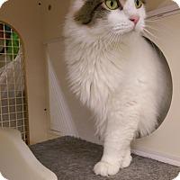Adopt A Pet :: Chanel-adoption pending - Bridgeton, MO