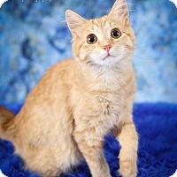 Adopt A Pet :: Sparkles - Plymouth, MN