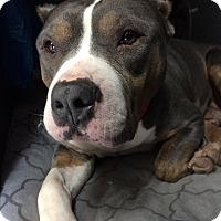 Adopt A Pet :: Hazel - St. Louis, MO