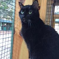 Adopt A Pet :: Missy - Odessa, FL