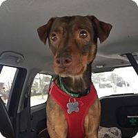Adopt A Pet :: *Adoption Pending*June - Manassas, VA