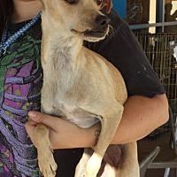 Adopt A Pet :: Spike(PRA) - Porter Ranch, CA