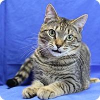 Adopt A Pet :: Bert - Winston-Salem, NC