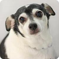 Adopt A Pet :: Brutus - Yukon, OK