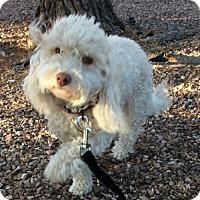 Adopt A Pet :: Susie - Tucson, AZ