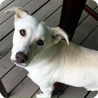German Shepherd Dog Mix Dog for adoption in Nashville, Tennessee - Wallace