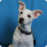 Adopt A Pet :: Gemma - Minneapolis, MN