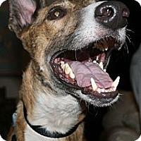 Adopt A Pet :: PTL Gunner