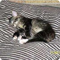 Adopt A Pet :: Sienna - Riverside, RI