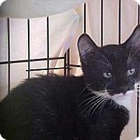 Adopt A Pet :: Bo - Lunenburg, MA