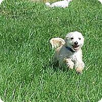 Adopt A Pet :: Sammie - South Amboy, NJ