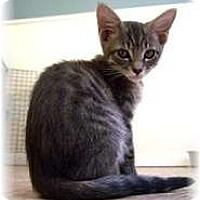 Adopt A Pet :: Turner - Shelton, WA