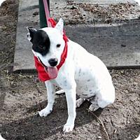 Adopt A Pet :: Lucy - Tampa, FL