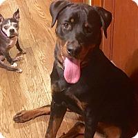 Adopt A Pet :: Terra - Nanuet, NY