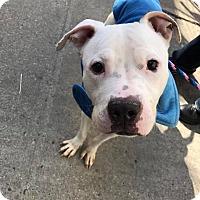 Adopt A Pet :: Edison - North Haledon, NJ