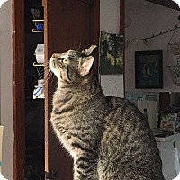 Adopt A Pet :: Brixton - Acushnet, MA