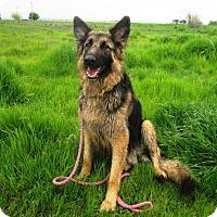 Adopt A Pet :: Ruby - Pleasant Grove, CA