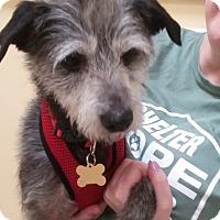 Adopt A Pet :: Sid - Thousand Oaks, CA