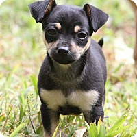 Adopt A Pet :: Chim Chim~adopted! - Glastonbury, CT