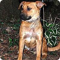 Adopt A Pet :: Butch - Franklin, TN