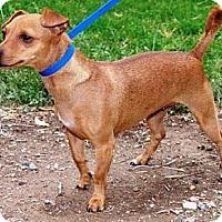 Adopt A Pet :: Mama - Gilbert, AZ