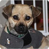 Adopt A Pet :: Colby - Seattle, WA