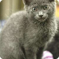 Adopt A Pet :: Griffin - Sacramento, CA