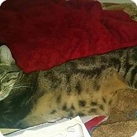 Adopt A Pet :: Zena - Little Neck, NY