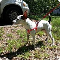 Adopt A Pet :: Kirby - Lawrenceville, GA