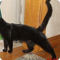 Adopt A Pet :: NOLA - Acme, PA