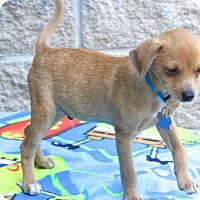 Adopt A Pet :: Cardiff - Norwalk, CT
