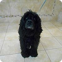 Adopt A Pet :: Onyx - Kannapolis, NC