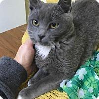 Adopt A Pet :: Smokey Joe - Fayetteville, WV