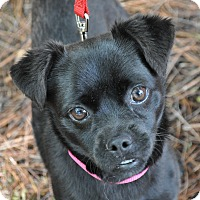Adopt A Pet :: CeCe - Atlanta, GA