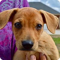 Adopt A Pet :: Gabe - CRANSTON, RI