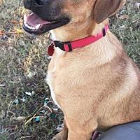 Adopt A Pet :: Prince Oscar - Glastonbury, CT