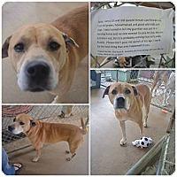 Adopt A Pet :: Jada URGENT - Providence, RI
