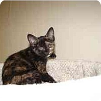 Adopt A Pet :: Tulula - Milwaukee, WI