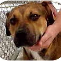 Adopt A Pet :: Zues - Scottsdale, AZ