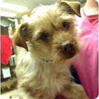 Adopt A Pet :: Wayne - Seattle, WA