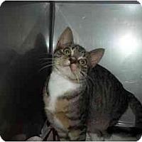 Adopt A Pet :: TABITHA - Little Neck, NY
