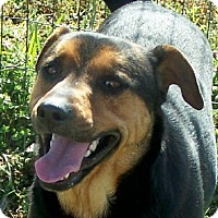 Adopt A Pet :: Spock - Conway, AR